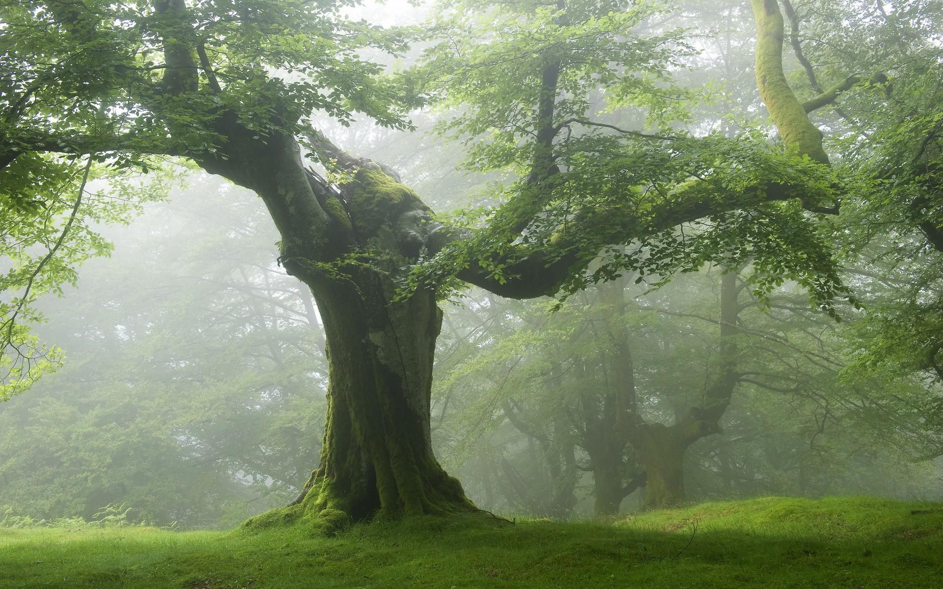 Préférence Les arbres qui saignent RF15